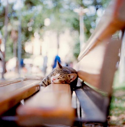 تصاویر جدید زیباسازی وبلاگ , سایت پیچک » بخش تصاویر زیباسازی » سری چهارم www.pichak.net کلیک کنید
